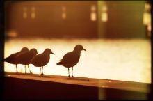 喂鸽子不一定要去巴黎,还可以去墨尔本。