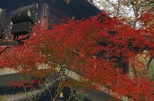 赏秋之栖霞山红叶🍁