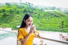 造访顶级锡兰红茶园|早,去喝茶吧