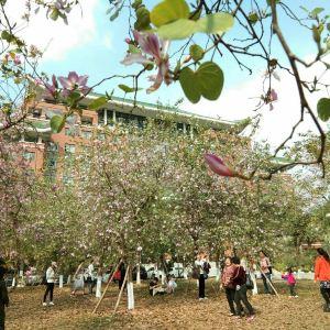 华南农业大学旅游景点攻略图