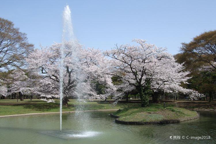代代木公園4