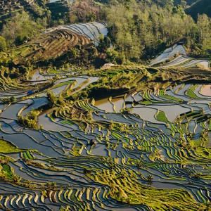 个旧游记图文-红河,元阳梯田,美丽的大地。