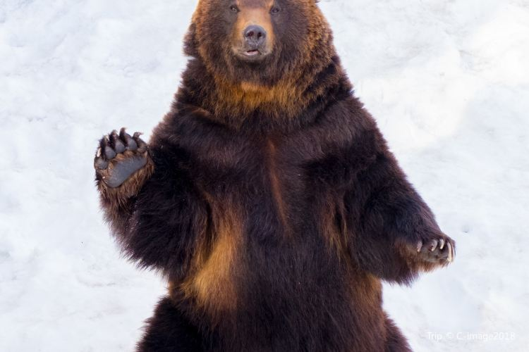 Noboribetsu Bear Park2