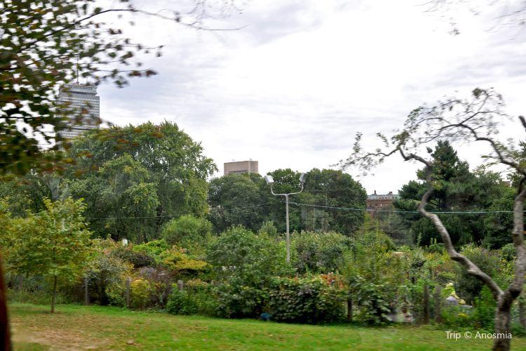 Fenway Victory Gardens4