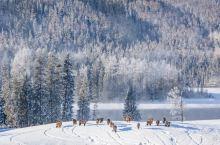 冬天不去旅行,你将错过整个冰雪世界!