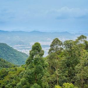 东莞游记图文-观音山森林文化节,和森林交个朋友吧