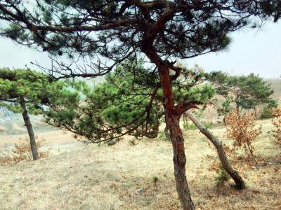 Niangniang Mountain Scenic Area
