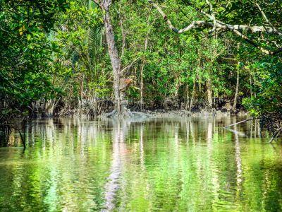 民丹紅樹林探索遊