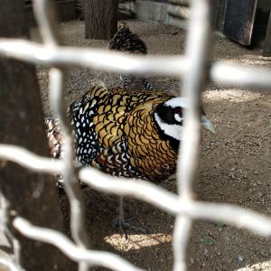 石家庄市动物园旅游景点攻略图