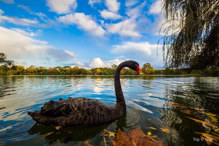 Western Springs Lakeside Park2
