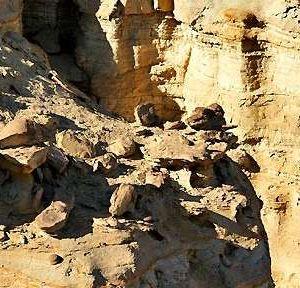 白杨河大峡谷旅游景点攻略图