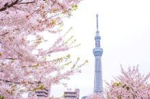 今年樱花季去东京不仅当花痴,还要做老饕!