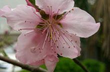 桃花开,开得春风也笑