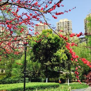 龙头寺公园旅游景点攻略图