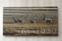 青藏高原的精灵 藏羚羊 明信片