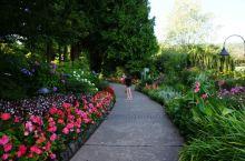 我在布查特花园,拍花赏花