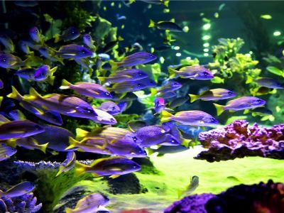 Lanzhou Ocean World