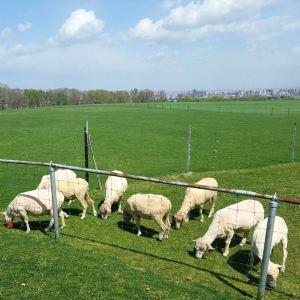 羊之丘展望台旅游景点攻略图