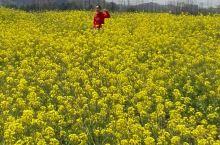 湘湖的油菜花