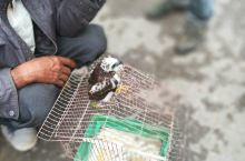 竟然在墨江集市看到卖老鹰啊!