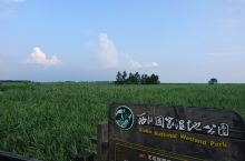 崇明西沙湿地