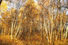 乌兰布统草原的金秋
