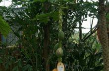 大阜宁的植物游乐园