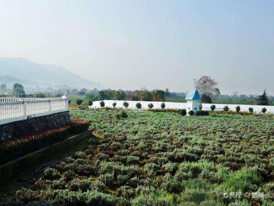 Qujiang Lavender Garden