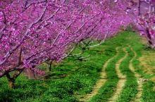 还去什么日本,离昆明100公里处藏着一条鲜花隧道,快去!