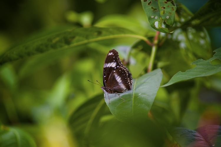 Kuala Lumpur Butterfly Park2