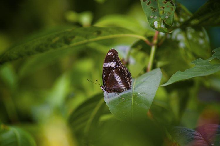 쿠알라룸푸르 나비공원2