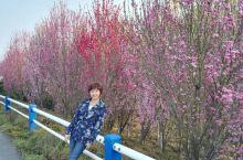万里江山自驾游第五天:巢湖~太平湖~黄山汤口镇