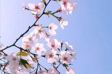 春日寻花花不语