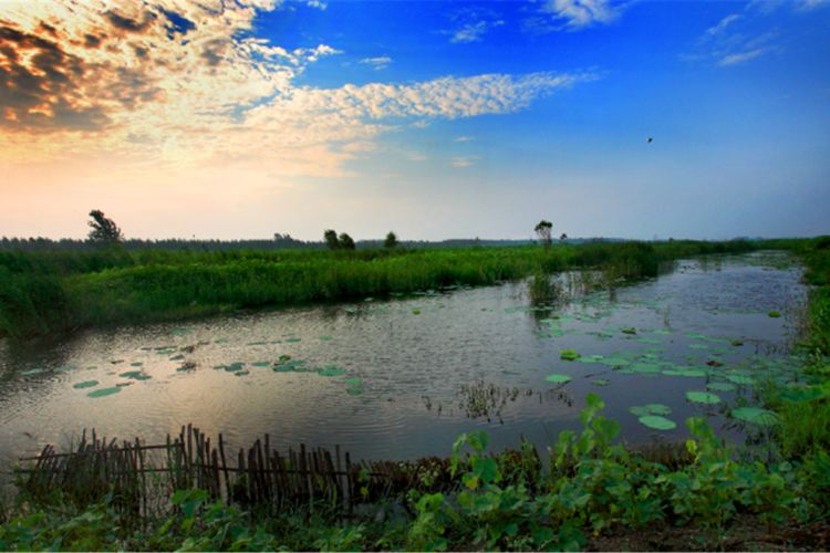 Weishan Lake National Wetland Scenic Area4
