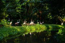 去非洲看野生动物太遥远?带着孩子还可以去东南亚这些超赞动物园!