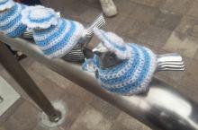 镰仓的小鸟在七月换上了清新的蓝衣服