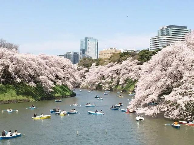 去日本,怎么买机票最便宜?