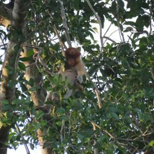 克里亚斯红树林旅游景点攻略图