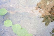 南岙自然山水游泳池