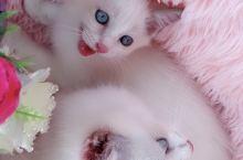 自己家繁育的小猫有喜欢的吗?