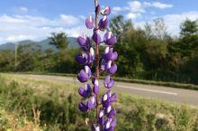 北海道的鲜花拾得