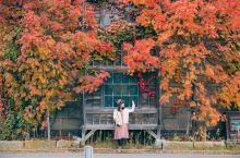 北海道的红叶季(札幌、小樽、定山溪赏枫之旅)