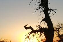 弱水胡杨、黑城遗址、怪树林,揭开秋的序幕