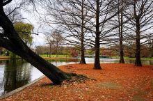 #金秋红叶#波士顿公共花园  层林尽染,美轮美奂