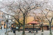 樱花季京都最值得打卡拍照超好看景点 图、、,是在京都衹园。路线:搭乘阪急线至河原町站下车,再沿四条通