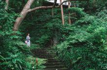 《海街日记》里的镰仓,空气里都是日系的清新味