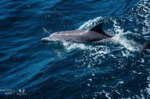 走,去史蒂芬港看海豚