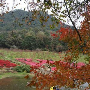 石门国家森林公园赏花旅游景点攻略图