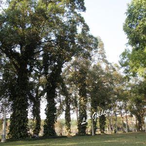 吴哥皇家公园旅游景点攻略图