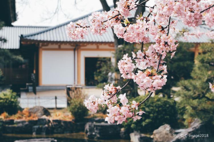 Sanjusangen-do Temple4
